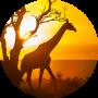 freelancers-in-India-Article-Writing-Nairobi-George-Kamuhu